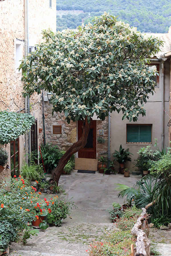 Mallorca Travelguide Valldemossa